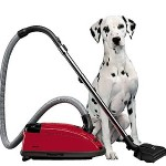 Cleaning Up After Pets | Housemaids